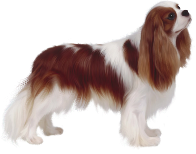 kisspng-cavalier-king-charles-spaniel-poodle-dog-breed-png-animals-16-5c0dca24d5d674.0709598815444075888759
